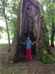 Author Vivian Lawry standing inside giant, hollow sycamore tree