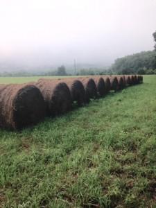 hay bales in morning mist, Nimrod Hall, Virginia