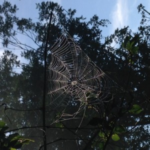 Nimrod Hall Writers' Workshop spider web