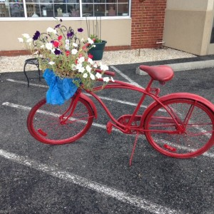 Ashland-bike-red-petunia