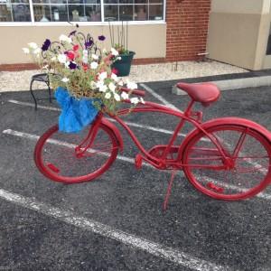 Ashland-bike-red-petunia