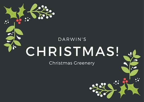 darwins christmas greenery