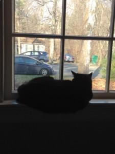 cat by window