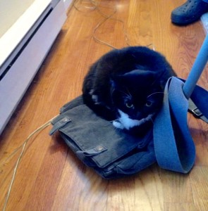 black and white cat crouched on bag