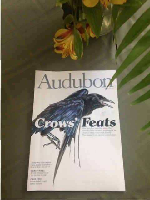 "Audubon magazine featuring ""Crows' Feats"""