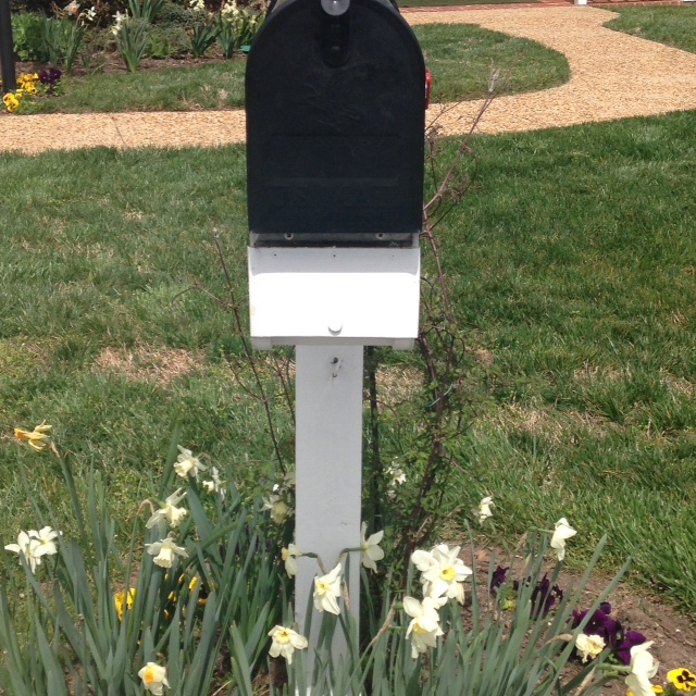 mailbox surrounded by flowers in spring