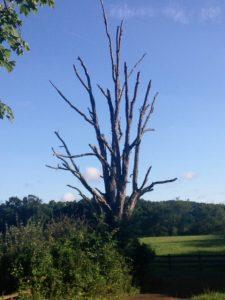 dead tree nimrod hall