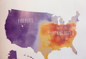fireflies speaking american