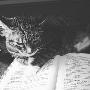 book addict cat