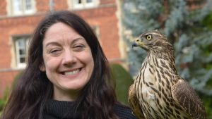 stories within stories helen macdonald hawk